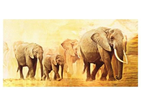 Images d'éléphants