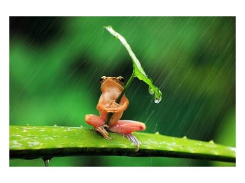 photo de grenouille avec parapluie