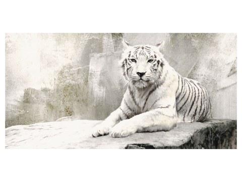 Photos de tigres