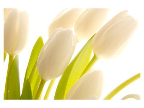 Images de tulipes